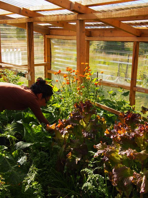 Rocio in her greenhouse