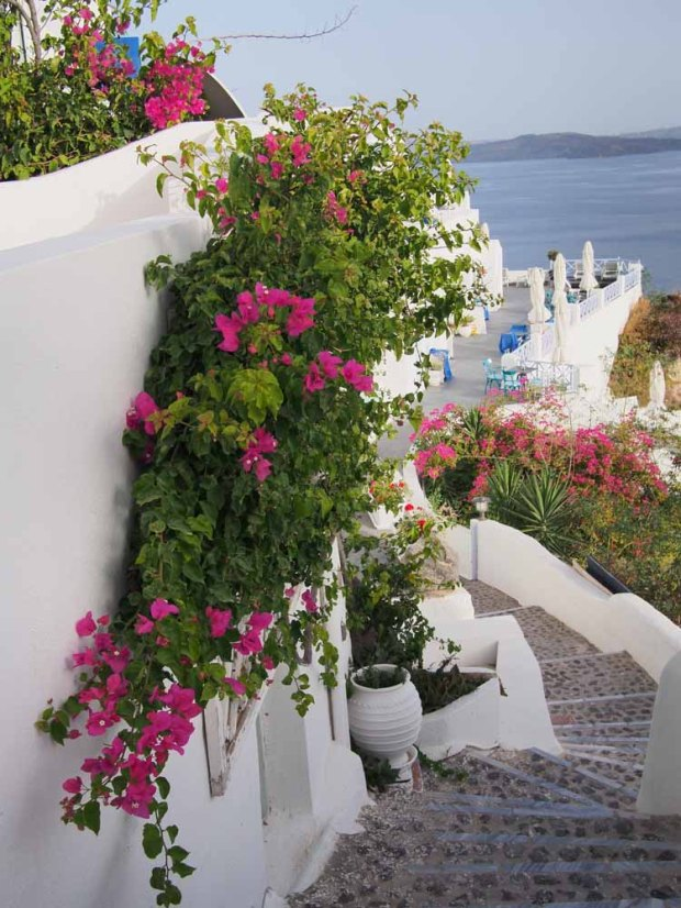 Winding stairs and pink flowers